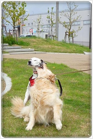 2010,5,13お散歩4