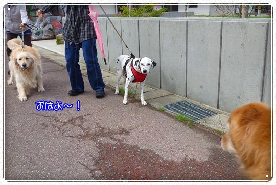2010,5,13お散歩3