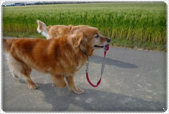 2010,5,13お散歩9
