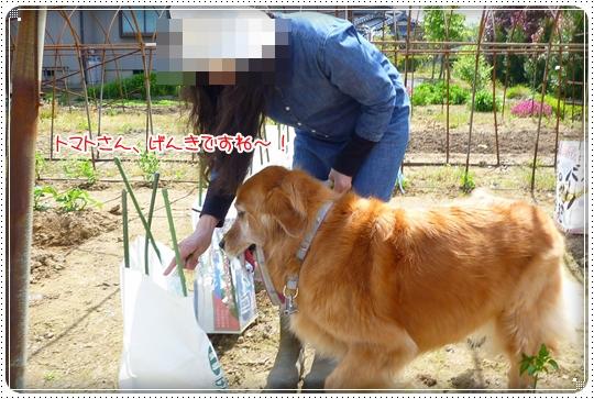 2010,5,16お散歩3