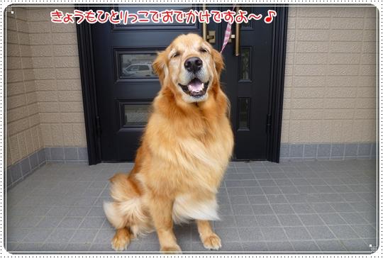 2010,5,28お散歩6