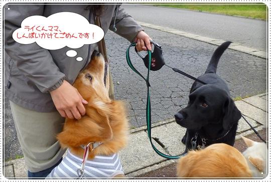 2010,5,28お散歩3