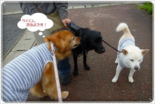 2010,5,28お散歩1
