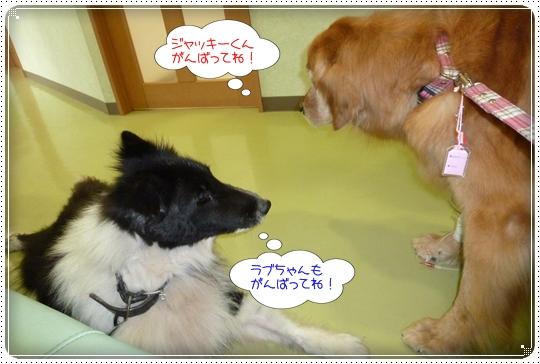 2010,5,28お散歩12