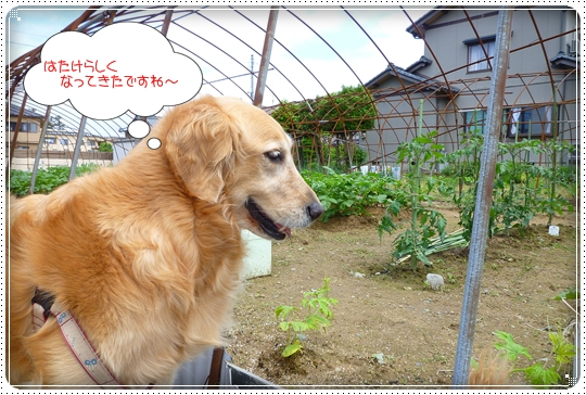 2010,5,29お散歩8