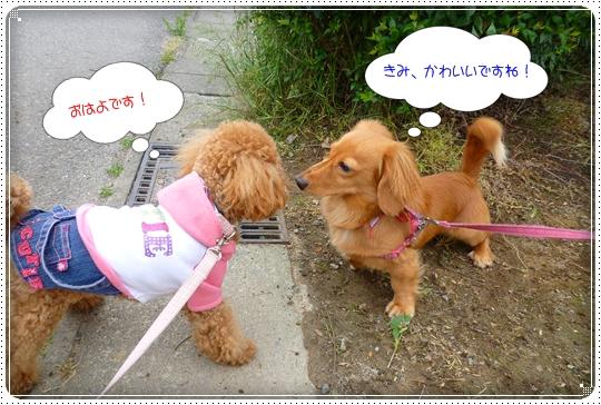 2010,5,30お散歩5