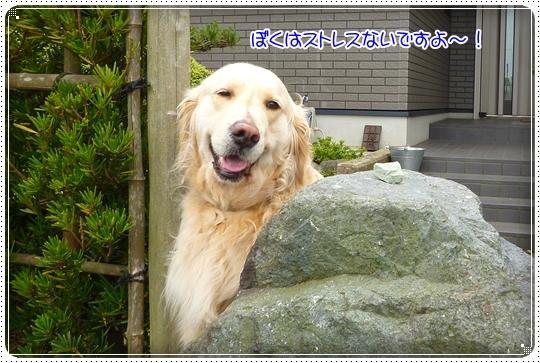 2010,5,30お散歩3
