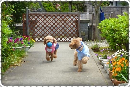 2010,5,30お散歩8