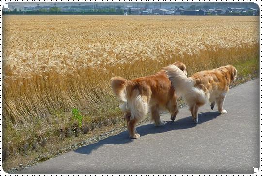 2010,6,3お散歩6