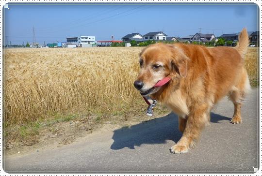 2010,6,3お散歩1