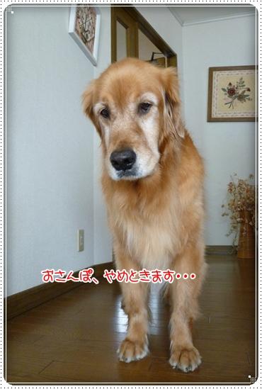 2010,6,5お散歩4