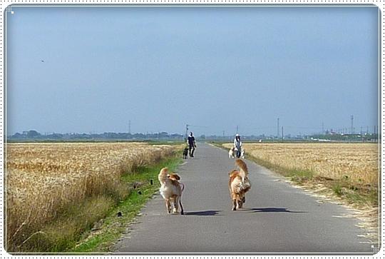 2010,6,6お散歩11