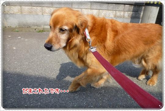 2010,6,7お散歩3