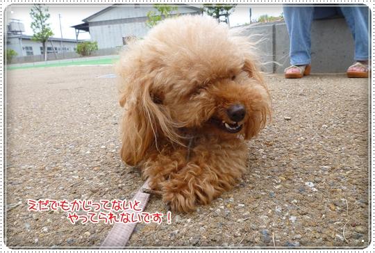 2010,6,7お散歩10