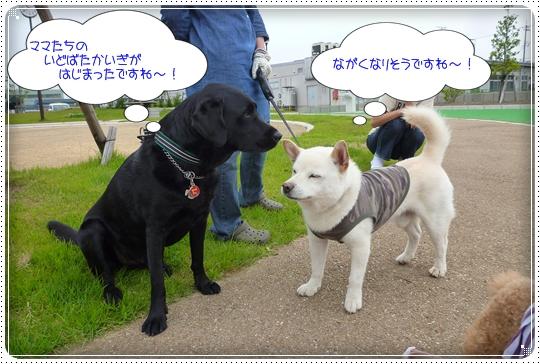 2010,6,7お散歩9