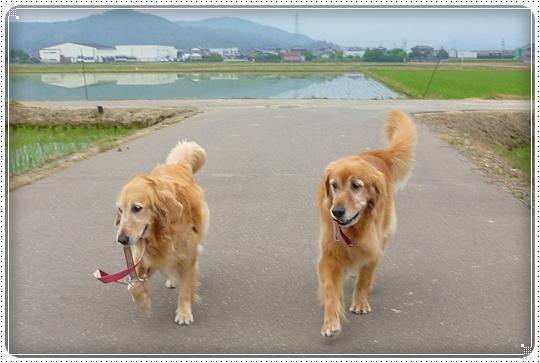 2010,6,8お散歩7