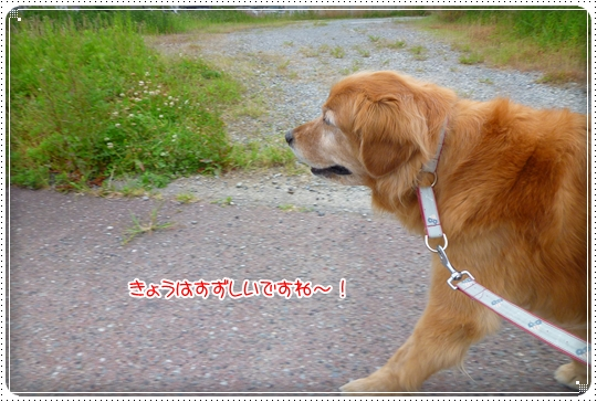 2010,6,8お散歩1