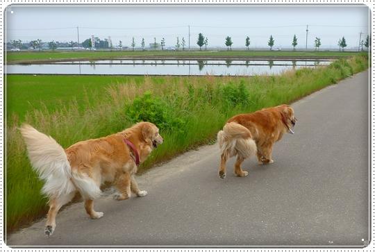 2010,6,8お散歩8