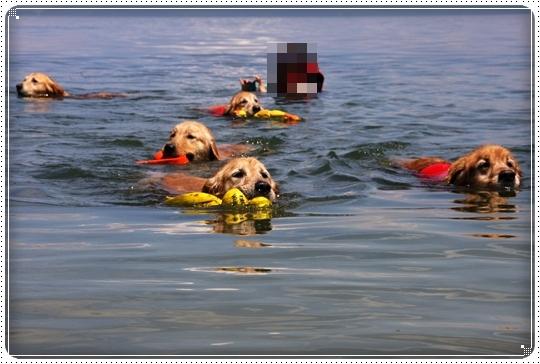 2010,6,10琵琶湖13