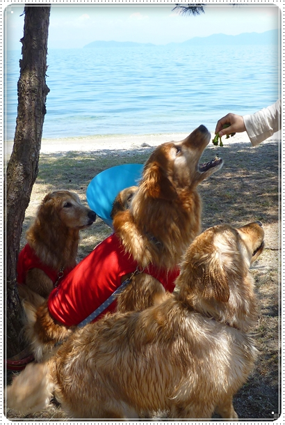 2010,6,11琵琶湖7