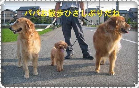 2010,6,13お散歩3