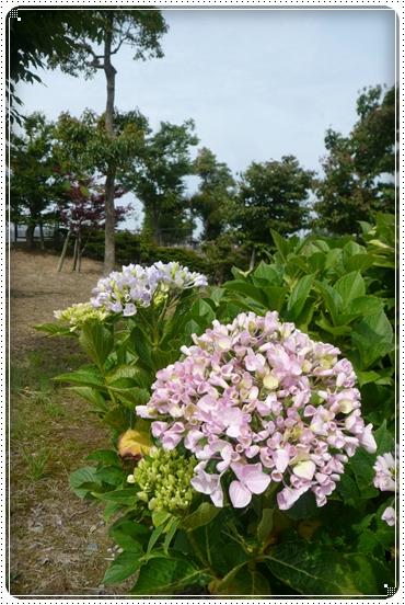 2010,6,15お散歩4