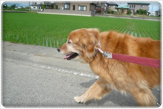 2010,6,15お散歩1