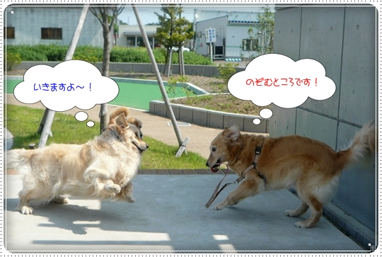 2010,6,17お散歩3