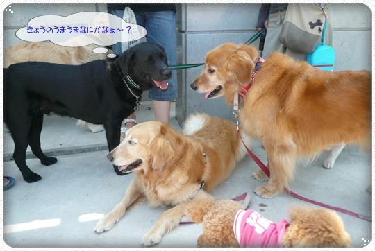 2010,6,17お散歩7