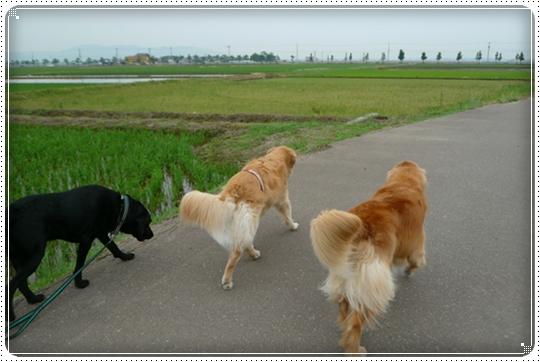 2010,6,18お散歩6