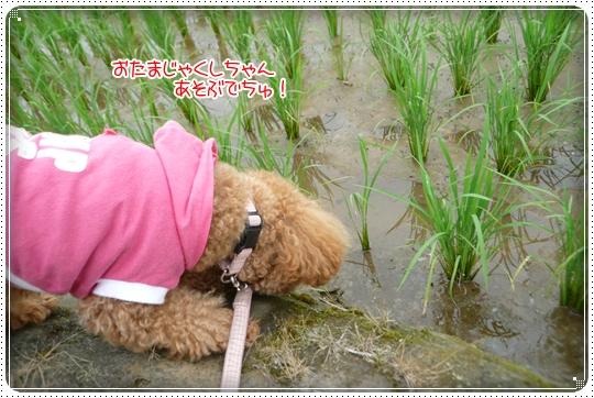 2010,6,18お散歩7