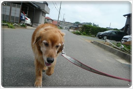 2010,6,22お散歩3