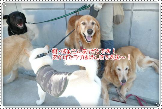 2010,6,24お散歩11