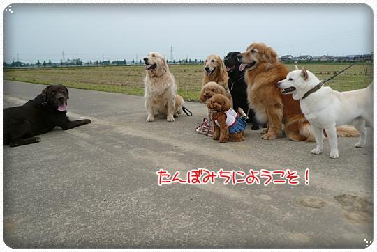 2010,6,25お散歩6