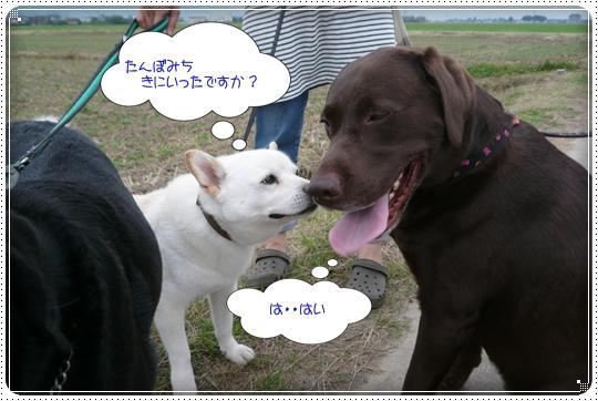 2010,6,25お散歩8