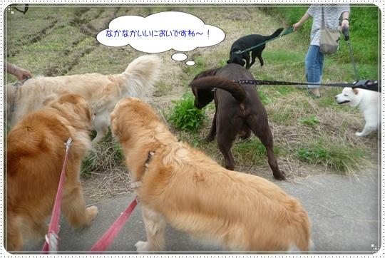 2010,6,25お散歩7