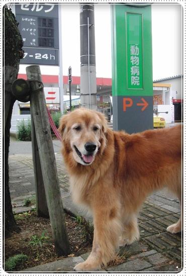 2010,6,29お散歩3