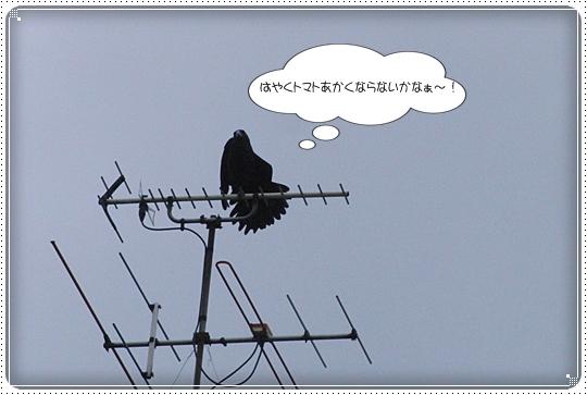 2010,6,29お散歩20