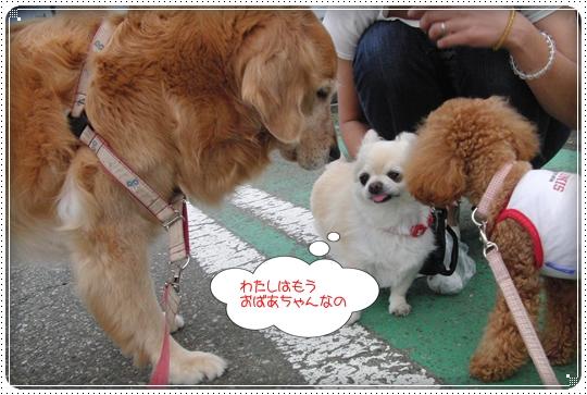2010,6,29お散歩10