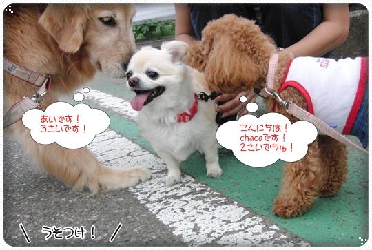 2010,6,29お散歩9