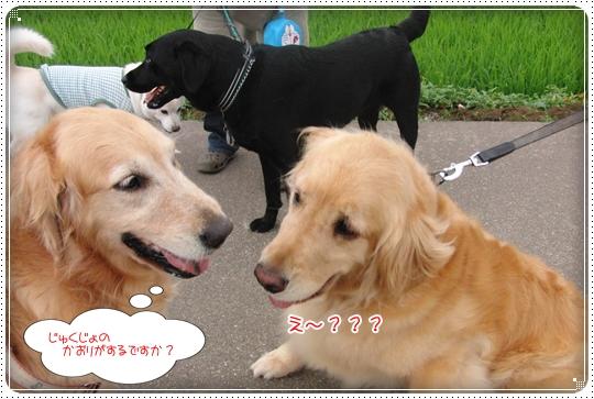 2010,6,29お散歩18