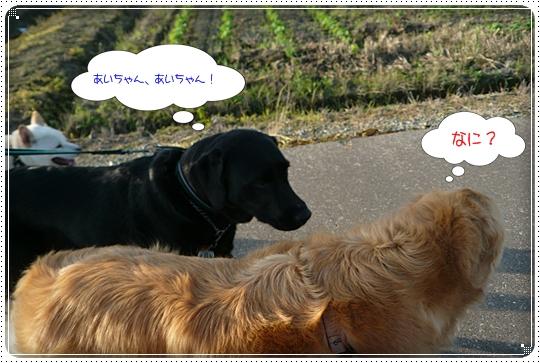 2010,6,30お散歩4
