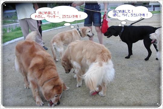 2010,7,1お散歩6