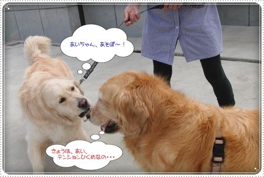 2010,7,2お散歩5