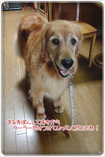 2010,7,2お散歩3