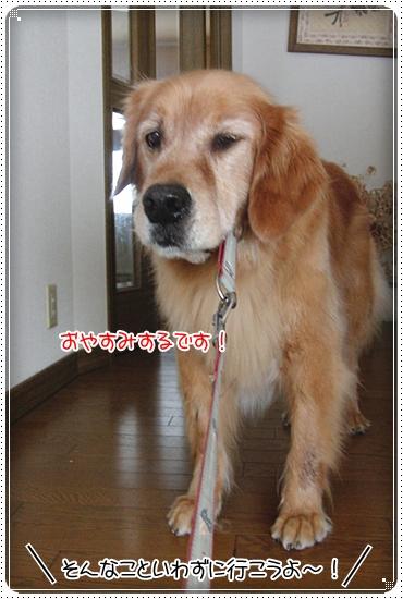2010,7,2お散歩2