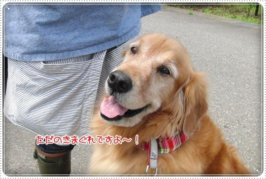 2010,7,2お散歩11
