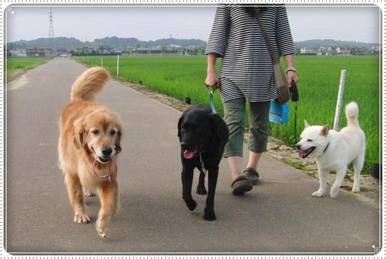 2010,7,2お散歩14