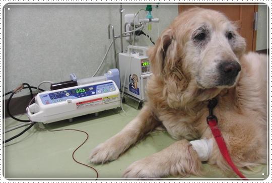 2010,7,4病院12