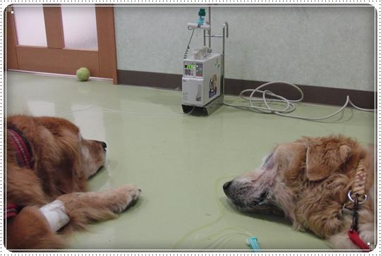2010,7,4病院11